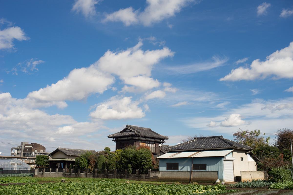 小春日和の田園風景、ではなく都内です。